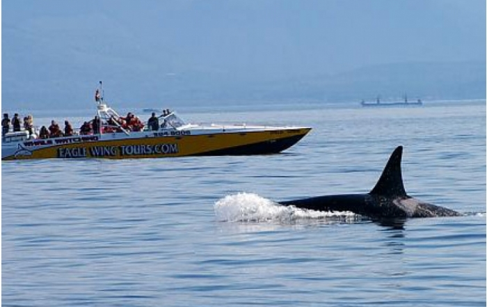 eagle-wing-tours-whale-watching-boat-victoria-british-columbia