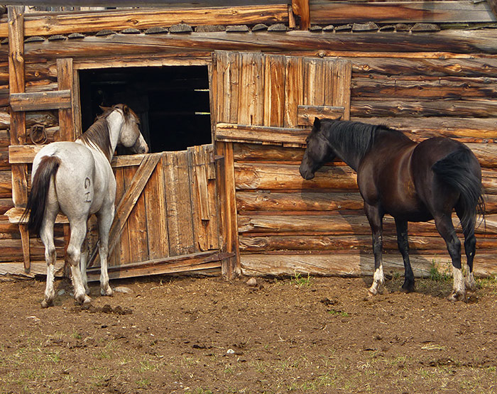 horse-barn-nimpo-lake-highway20-chilcotin-british-columbia