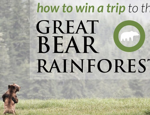 Eat Chocolate, Save Bears and Win a Great Bear Rainforest trip