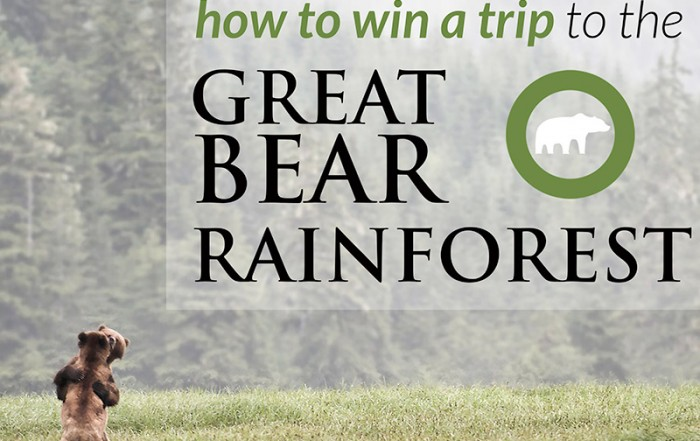 Eat Chocolate, Save the Bears and Win a trip to the Great Bear Rainforest with the Raincoast Conservation Foundation, British Columbia