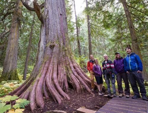 Ancient Forest / Chun T'oh Whudujut Provincial Park, BC