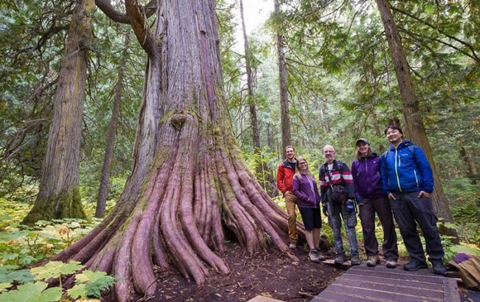 Ancient Forest / Chun T'oh Whudujut Provincial Park, Prince George, British Columbia. Photo: Ancient Forest Alliance