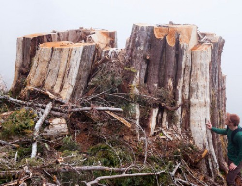 Stand up for BC's Endangered Old-growth Forests