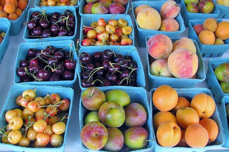Fresh locally-grown fruit in the Okanagan Valley, British Columbia