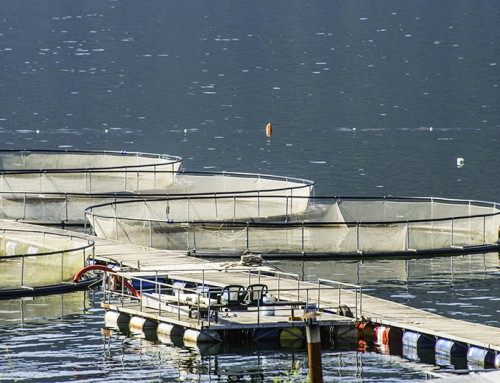 Union of BC Municipalities Votes to Reject Open Net-pen Salmon Farms