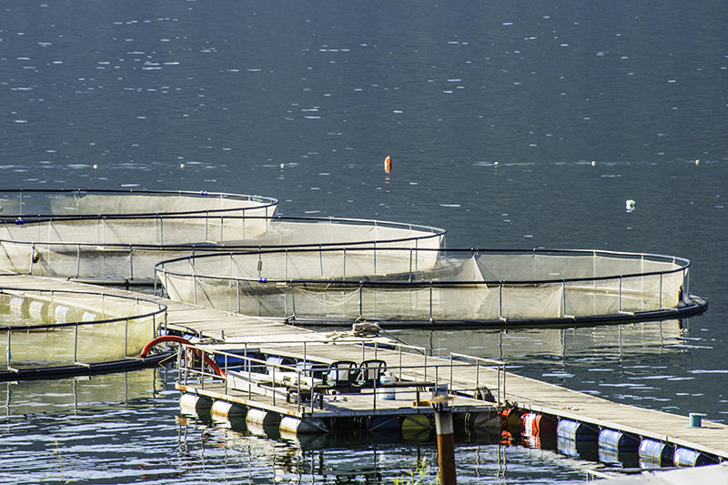 Union of BC Municipalities Vote to Reject Open Net-pen Salmon Farms