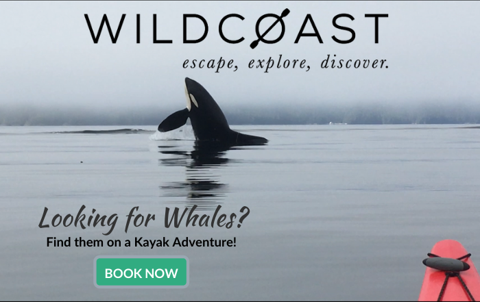 Wildcoast Adventures; Multi-Day Kayaking Expeditions in British Columbia