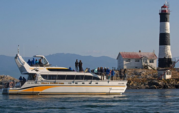 Eagle Wing Tours Whale Watching, Victoria, Vancouver Island, British Columbia