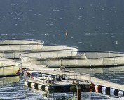 Union of BC Municipalities Vote to Reject Open Net-pen Salmon Farms